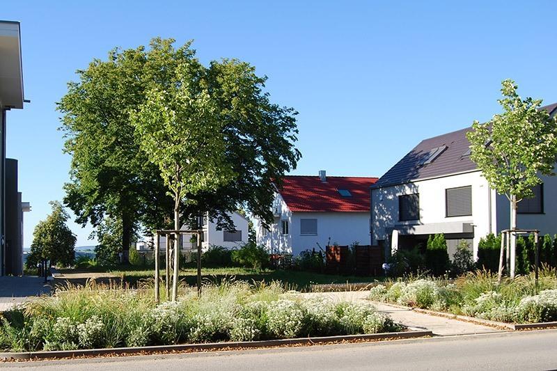 Blick von der Straße auf die Häuser und die Grünfläche