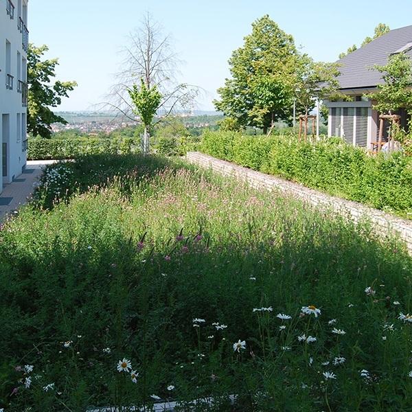 Hartenecker Höhe - Blick auf Blumenbeet
