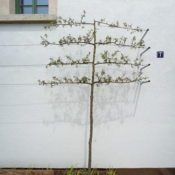 Landschaftsarchitektur Backnang - Blick auf Baum vor Hausnummer 7
